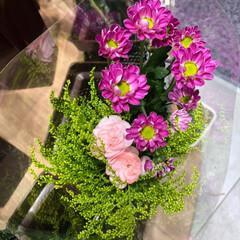 スーパーマーケット/花屋さんの花/至福のひととき/ライフ 3、2019年7月2日、トナリエの花屋さ…(6枚目)