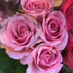 ありがとう/花屋さんの花/よってって/七夕飾り/季節インテリア/七夕インテリア/... 4、2020年6月26日、本日、久米診療…(8枚目)