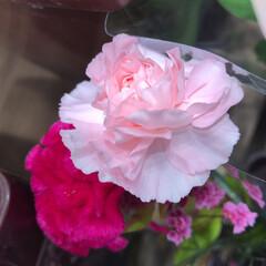 スーパーマーケット/花屋さんの花/ライフ/パシャリおでかけワンショット/おでかけワンショット 2、2019年7月28日、トナリエの花屋…(7枚目)