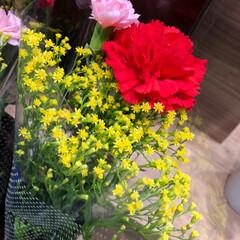 花屋さんの花/スーパーマーケット/おすすめアイテム/みんなにおすすめ 2、2019年6月14日、トナリエの花屋…