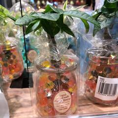 花屋さんの花/至福のひととき/スーパーマーケット/ライフ 1、2019年7月7日、トナリエの花屋さ…(2枚目)