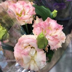 わたしのお盆/スーパーマーケット/花屋さんの花/ライフ 3、2019年8月18日、トナリエの花屋…(5枚目)