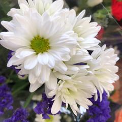 花屋さんの花/パシャリおでかけワンショット/スーパーマーケット/おでかけワンショット 4、2019年9月6日、万代の花屋さんに…(5枚目)