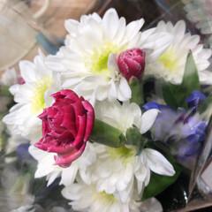 わたしのお盆/スーパーマーケット/花屋さんの花/ライフ 3、2019年8月18日、トナリエの花屋…(10枚目)