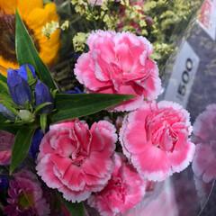 ライフ/スーパーマーケット/至福のひととき/花屋さんの花 2、2019年7月7日、トナリエの花屋さ…(10枚目)