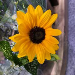 ライフ/至福のひととき/花屋さんの花/スーパーマーケット 3、2019年7月4日、トナリエの花屋さ…(5枚目)