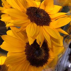 スーパーマーケット/ライフ/至福のひととき/花屋さんの花 1、2019年7月12日、トナリエの花屋…(10枚目)