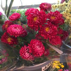 至福のひととき/花屋さんの花/よってって 1、2019年7月12日、よってっての花…(9枚目)