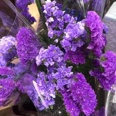 スーパーマーケット/花屋さんの花/ライフ/地元のオススメ 1、2019年8月7日、トナリエの花屋さ…(7枚目)