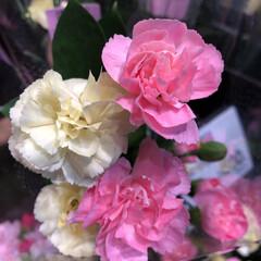わたしのお盆/スーパーマーケット/花屋さんの花/ライフ 1、2019年8月18日、トナリエの花屋…(7枚目)