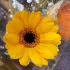 スーパーマーケット/ライフ/至福のひととき/花屋さんの花 1、2019年7月12日、トナリエの花屋…(7枚目)