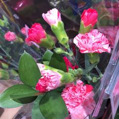 スーパーマーケット/花屋さんの花/ライフ/パシャリおでかけワンショット/おでかけワンショット 2、2019年7月28日、トナリエの花屋…(8枚目)