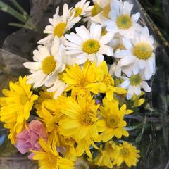 花屋さんの花/ありがとう/よってって/七夕飾り/季節インテリア/七夕インテリア/... 3、2020年6月26日、本日、久米診療…(3枚目)