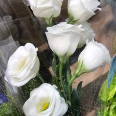 スーパーマーケット/ライフ/至福のひととき/花屋さんの花 1、2019年7月12日、トナリエの花屋…(6枚目)