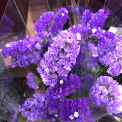 ライフ/至福のひととき/花屋さんの花/スーパーマーケット 3、2019年7月4日、トナリエの花屋さ…(3枚目)