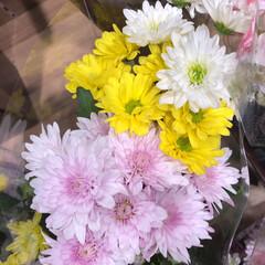 スーパーマーケット/花屋さんの花/ライフ/地元のオススメ 1、2019年8月7日、トナリエの花屋さ…(8枚目)