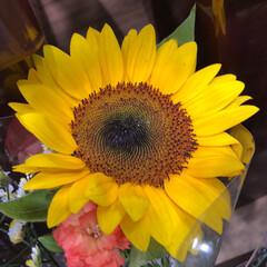 スーパーマーケット/花屋さんの花/ライフ/パシャリおでかけワンショット/おでかけワンショット 2、2019年7月28日、トナリエの花屋…(3枚目)