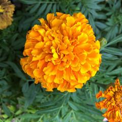 残暑見舞い申し上げます/産直市場/花屋さんの花/よってって/インテリア/プチプラ/... 2021年8月7日、美しい花を見てカメラ…(8枚目)
