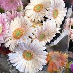 至福のひととき/花屋さんの花/よってって 1、2019年7月12日、よってっての花…(5枚目)