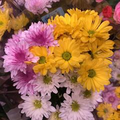 スーパーマーケット/花屋さんの花/ライフ/地元のオススメ 2、2019年8月7日、トナリエの花屋さ…