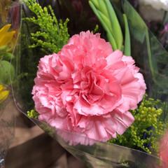 スーパーマーケット/花屋さんの花/ライフ/地元のオススメ 1、2019年8月7日、トナリエの花屋さ…(4枚目)