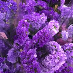 ライフ/スーパーマーケット/至福のひととき/花屋さんの花 2、2019年7月7日、トナリエの花屋さ…(2枚目)