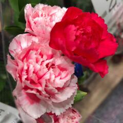 至福のひととき/花屋さんの花/スーパーマーケット/ライフ 2、2019年7月2日、トナリエの花屋さ…(2枚目)