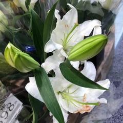 花屋さんの花/スーパーマーケット/ライフ/雨季ウキフォト投稿キャンペーン 2、2019年6月28日、ライフの花屋さ…(9枚目)