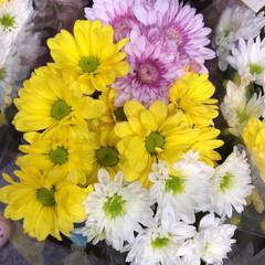 スーパーマーケット/花屋さんの花/ライフ/地元のオススメ 1、2019年8月7日、トナリエの花屋さ…(10枚目)