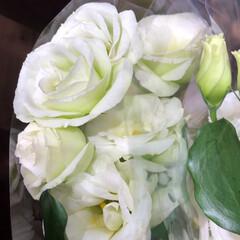 わたしのお盆/スーパーマーケット/花屋さんの花/ライフ 3、2019年8月18日、トナリエの花屋…(3枚目)
