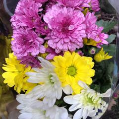 パシャリおでかけワンショット/ライフ/花屋さんの花/スーパーマーケット/おでかけワンショット 3、2019年7月28日、トナリエの花屋…(8枚目)