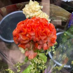 スーパーマーケット/花屋さんの花/至福のひととき/ライフ 3、2019年7月2日、トナリエの花屋さ…(2枚目)