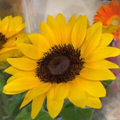 ありがとう/花屋さんの花/よってって/アクセサリー収納/ピアス収納/ネックレス収納/... 先日、買い物のついでに。よってって店。花…(9枚目)