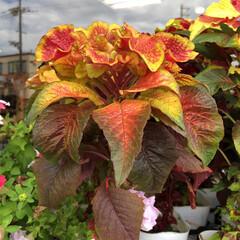 残暑見舞い申し上げます/産直市場/花屋さんの花/よってって/インテリア/プチプラ/... 2021年8月7日、美しい花を見てカメラ…(9枚目)