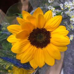 ライフ/至福のひととき/花屋さんの花/スーパーマーケット 3、2019年7月4日、トナリエの花屋さ…(8枚目)