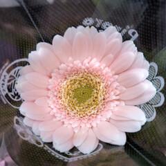 スーパーマーケット/花屋さんの花/ライフ/パシャリおでかけワンショット/おでかけワンショット 2、2019年7月28日、トナリエの花屋…(9枚目)