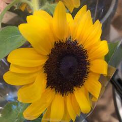 ありがとう/花屋さんの花/よってって/アクセサリー収納/ピアス収納/ネックレス収納/... 先日、買い物のついでに。よってって店。花…(8枚目)