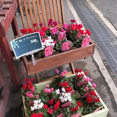 コーナン/花屋さんの花/フォト投稿テーマ大募集! 2、2019年10月18日、コーナンの花…(8枚目)