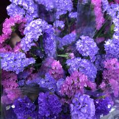 スーパーマーケット/花屋さんの花/ライフ/雨季ウキフォト投稿キャンペーン 2、2019年6月30日、トナリエの花屋…
