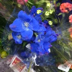 スーパーマーケット/花屋さんの花/至福のひととき/ライフ 2、2019年7月4日、トナリエの花屋さ…