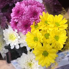 パシャリおでかけワンショット/ライフ/花屋さんの花/スーパーマーケット/おでかけワンショット 3、2019年7月28日、トナリエの花屋…(7枚目)
