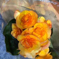 花屋さんの花/スーパーマーケット/ライフ/雨季ウキフォト投稿キャンペーン 2、2019年6月28日、ライフの花屋さ…(4枚目)