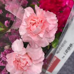 パシャリおでかけワンショット/ライフ/花屋さんの花/スーパーマーケット/おでかけワンショット 3、2019年7月28日、トナリエの花屋…(2枚目)