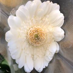 花屋さんの花/パシャリおでかけワンショット/スーパーマーケット/おでかけワンショット 4、2019年9月6日、万代の花屋さんに…(1枚目)