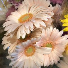 ありがとう/花屋さんの花/よってって/アクセサリー収納/ピアス収納/ネックレス収納/... 先日、買い物のついでに。よってって店。花…(10枚目)