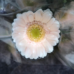 ライフ/至福のひととき/花屋さんの花/スーパーマーケット 1、2019年7月4日、トナリエの花屋さ…(10枚目)