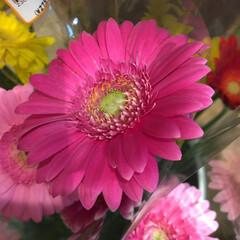 ありがとう/花屋さんの花/よってって/アクセサリー収納/ピアス収納/ネックレス収納/... 先日、買い物のついでに。よってって店。花…(7枚目)
