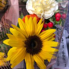 花屋さんの花/至福のひととき/スーパーマーケット/ライフ 1、2019年7月7日、トナリエの花屋さ…(8枚目)
