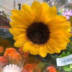 ライフ/至福のひととき/花屋さんの花/スーパーマーケット 1、2019年7月4日、トナリエの花屋さ…(9枚目)