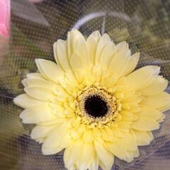 パシャリおでかけワンショット/スーパーマーケット/花屋さんの花/ライフ/おでかけワンショット 1、2019年8月2日、トナリエの花屋さ…(9枚目)